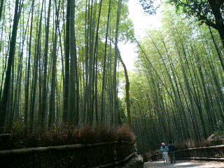 嵯峨野の竹林