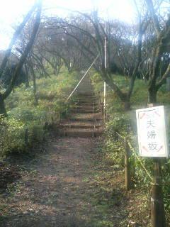 サクラ保存林