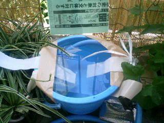 自動水やりシステム