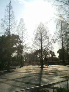 冬の昭和記念公園