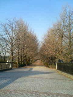落葉のイチョウ並木