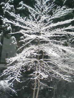 東北旅行2 雪の森