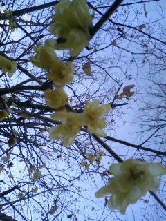 新春の花々