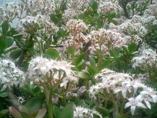 初島の花々