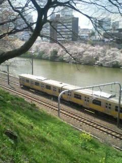 飯田橋の桜