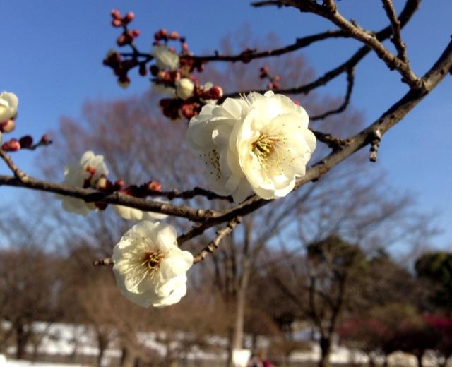 雪の昭和記念公園